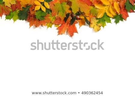 Amarelo laranja caranguejo maçãs outono Foto stock © sarahdoow