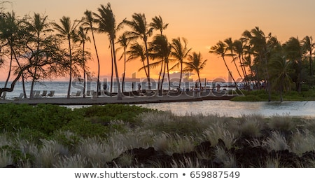 Palm trees sway in the wind near the ocean at sunset Stock photo © ruslanshramko