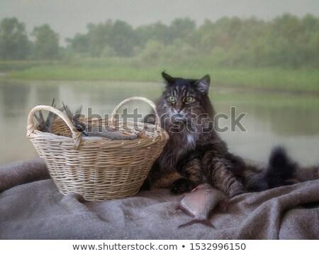 Stok fotoğraf: Kedi · oturma · balık · tutma · sepet · bali · Endonezya