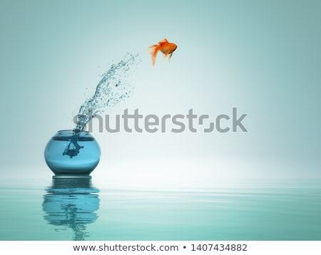 Goldfish · выбора · Cartoon · рыбы · золото · плаванию - Сток-фото © sigur
