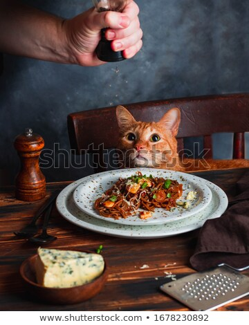 Dinner for a cat Stock photo © Hofmeester