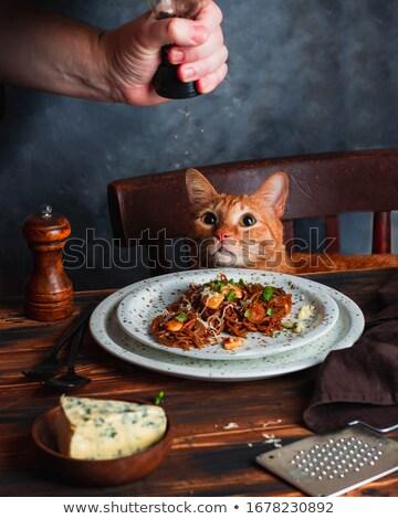 Cena gato rojo comer madera animales Foto stock © Hofmeester