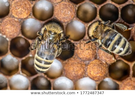 Foto stock: Bees Next To Beehive