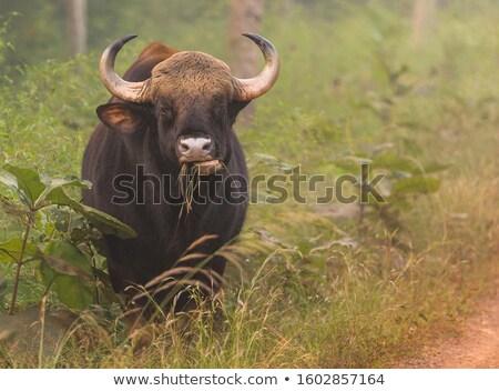 kauwen · gezicht · gras · vogel · portret · afrika - stockfoto © bradleyvdw