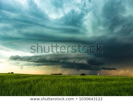 Tempesta campo texture sole panorama sfondo Foto d'archivio © saddako2