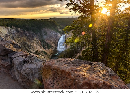 the famous lower falls in yellowstone national park stock photo © capturelight