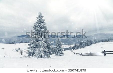 зима пейзаж пород зеленый небе дерево Сток-фото © rmarinello