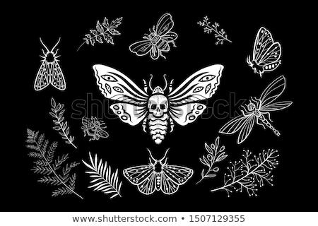 ensemble · insectes · jardin · de · fleurs · fleurs · fond · été - photo stock © clairev