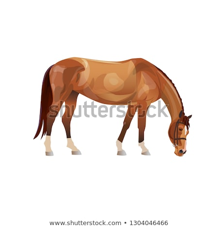 Brown and White Horse Eating Stock photo © rhamm