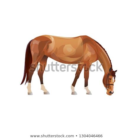 ブラウン · 白馬 · 食べ · 馬 · 農民 - ストックフォト © rhamm