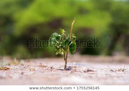 Kuraklık çim yaz ölüm göl bitki Stok fotoğraf © mycola