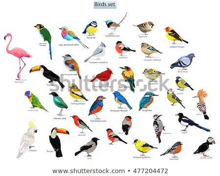 set of birds Stock photo © perysty