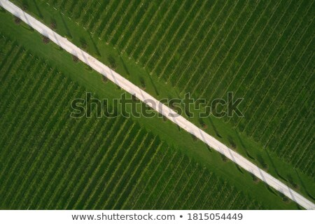 High angle view of vineyard Stock photo © Hofmeester