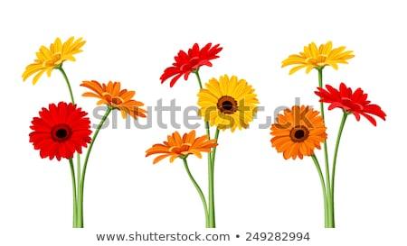 красочный Daisy иллюстрация фон цвета графических Сток-фото © kimmit