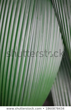 Helling verticaal textuur papier ontwerp retro Stockfoto © karandaev