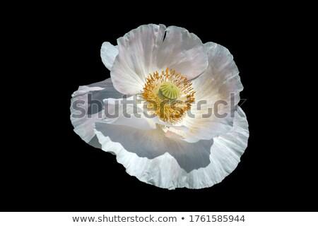 kwiaty · pełny · kwitnąć · wiosną · piękna · dekoracyjny - zdjęcia stock © ondrej83