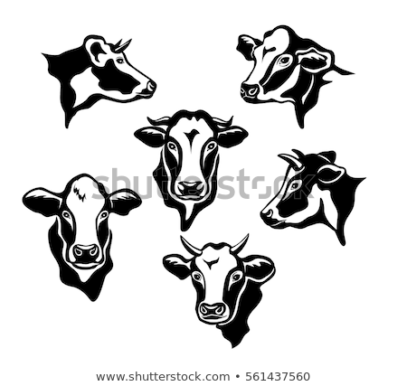 Witte hoofd vee kudde bruin Stockfoto © rghenry