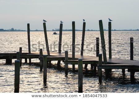 gaivotas · pier · água · paisagem - foto stock © hofmeester