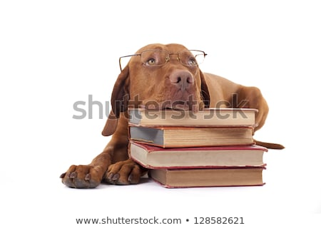 dog laying head on a pile of books stock photo © Quasarphoto