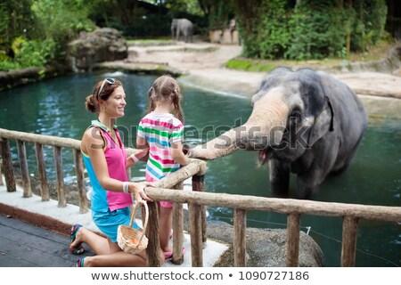 Asya fil hayvanat bahçesi yürüyüş büyük ağaçlar Stok fotoğraf © epstock