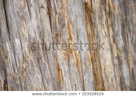 Boom textuur regenwoud tasmanië afbeelding Stockfoto © roboriginal