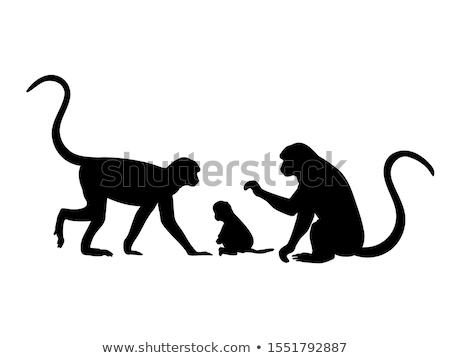 family of monkeys stock photo © adrenalina