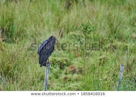 matar · parque · Quênia · árvore - foto stock © thp