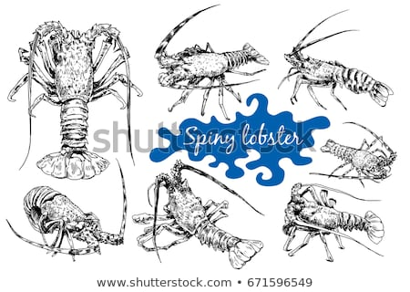 Spiny Lobster, Isolated Illustration Stock photo © ConceptCafe