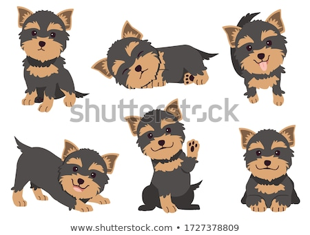 Stock photo: Funny Yorkshire Terrier portrait