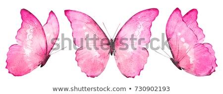 Flying бабочки акварель Purple бирюзовый Сток-фото © blackmoon979