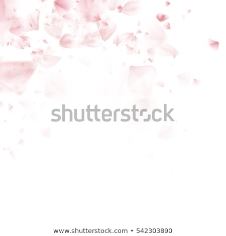 Spring pink flying petals of sakura. EPS 10 Stock photo © beholdereye
