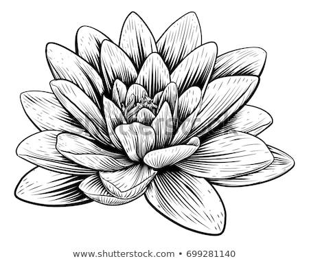 Lotus Flower Water Lily Vintage Woodcut Etching Stock photo © Krisdog