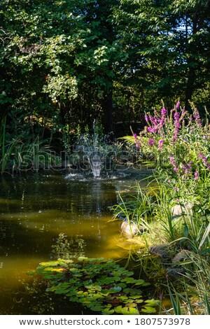 detail of waterflow on beautiful cascade Stock photo © taviphoto