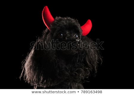 cute black poodle wearing red devil horns as a costume stock photo © feedough