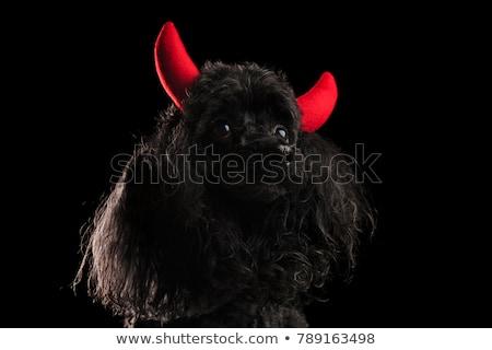 黒 · プードル · 犬 · ボール · 口 - ストックフォト © feedough