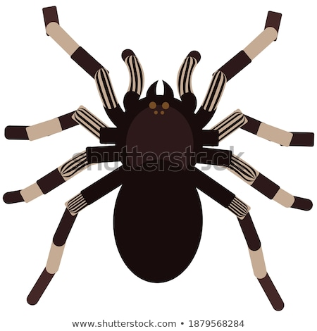 Brown scary big shaggy spider isolated on white Stock photo © orensila
