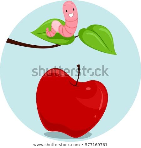 Elma solucan örnek solucan okul okuma Stok fotoğraf © lenm