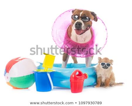 Stockfoto: Puppy · Blauw · huisdier · bulldog · geïsoleerd