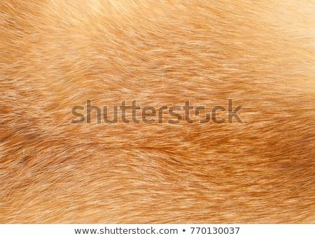 red shaggy skin of an animal closeup texture, Fur Texture Stock photo © ivo_13