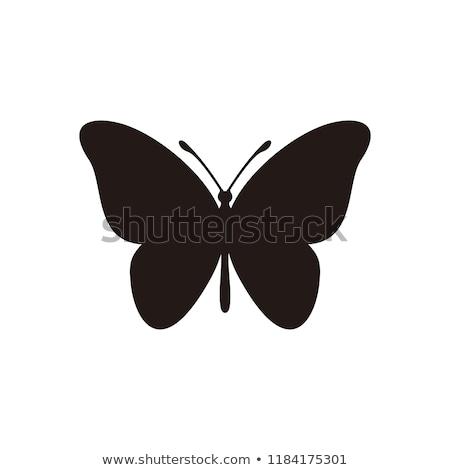 Farfalla icone vettore tre colori Foto d'archivio © mumut