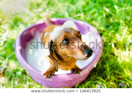 Garçon lavage chien shampooing illustration maison Photo stock © colematt
