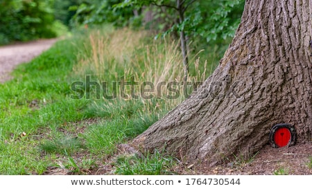 Enchanted wooden house in nature Stock photo © colematt