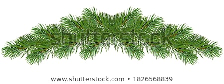 装飾 松 ツリー 手 抽象的な ストックフォト © odina222