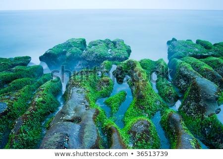 Rocky Seacoast full of green seaweed Stock photo © Ansonstock