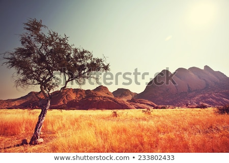 африканских · пейзаж · Ботсвана · драматический · деревья · дождь - Сток-фото © poco_bw