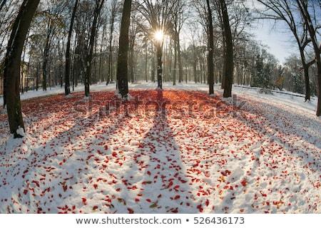 冷ややかな 植物 遅い 秋 マクロ 工場 ストックフォト © elenaphoto