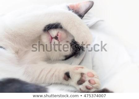 Uykulu kedi beyaz sevmek yeşil siyah Stok fotoğraf © chrisroll
