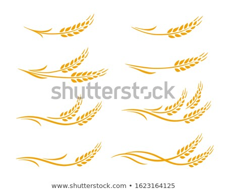 beer and spikes of cereal stock photo © inaquim