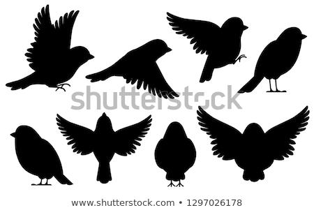 シルエット スズメ 背景 黒 自由 白 ストックフォト © perysty
