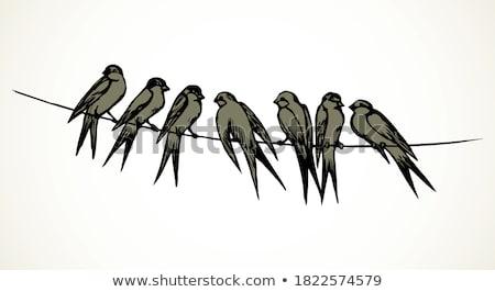 madarak · drótok · ül · naplemente · nap · csoport - stock fotó © courtyardpix